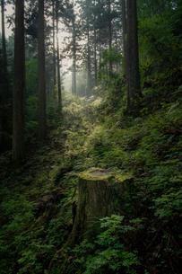 森林 風景の写真素材 [FYI03153187]