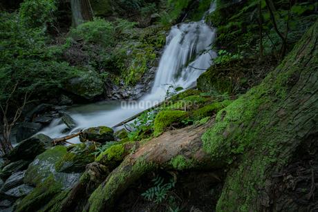 滝 風景の写真素材 [FYI03153197]