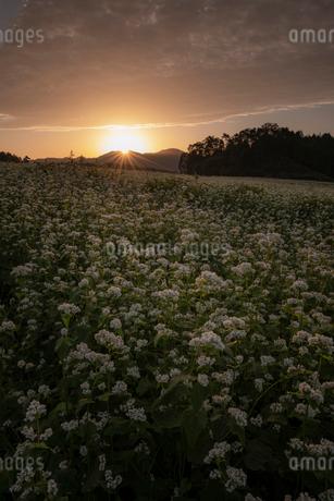 日本 奈良県 桜井市の写真素材 [FYI03153203]