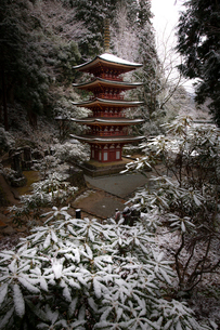 室生寺五重の塔 日本 奈良県 宇陀市の写真素材 [FYI03153223]