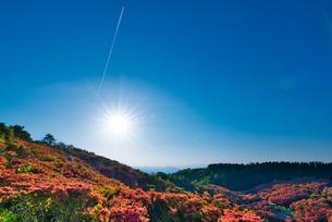 葛城山 自然ツツジ園 日本 奈良県 御所市の写真素材 [FYI03153361]