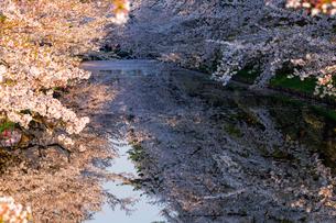 弘前公園 日本 青森県 弘前市の写真素材 [FYI03153379]