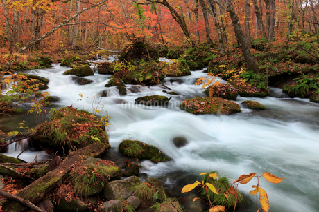奥入瀬渓流(Oirase River) 日本 青森県 十和田市の写真素材 [FYI03153381]