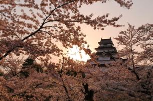 鶴ヶ城 桜の写真素材 [FYI03153383]