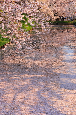 弘前公園 日本 青森県 弘前市の写真素材 [FYI03153388]