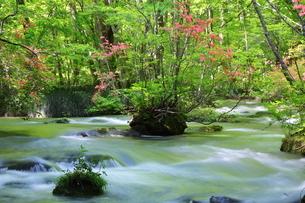 奥入瀬渓流(Oirase River) 日本 青森県 十和田市の写真素材 [FYI03153393]