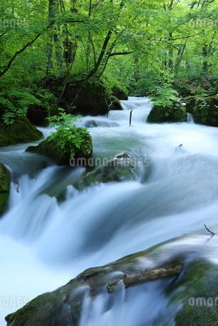 奥入瀬渓流(Oirase River) 日本 青森県 十和田市の写真素材 [FYI03153394]