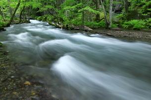 奥入瀬渓流(Oirase River) 日本 青森県 十和田市の写真素材 [FYI03153395]