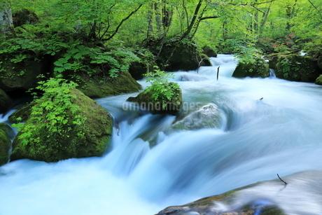 奥入瀬渓流(Oirase River) 日本 青森県 十和田市の写真素材 [FYI03153398]