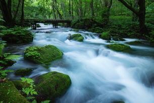 奥入瀬渓流(Oirase River) 日本 青森県 十和田市の写真素材 [FYI03153404]