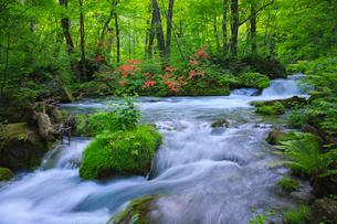 奥入瀬渓流(Oirase River) 日本 青森県 十和田市の写真素材 [FYI03153405]