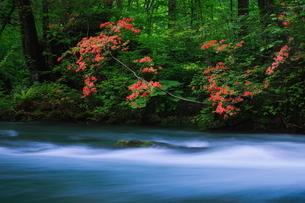 奥入瀬渓流(Oirase River) 日本 青森県 十和田市の写真素材 [FYI03153406]