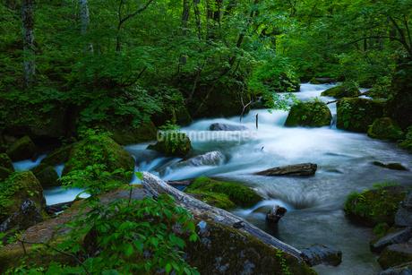 奥入瀬渓流(Oirase River) 日本 青森県 十和田市の写真素材 [FYI03153407]