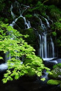 元滝伏流水 日本 秋田県 にかほ市の写真素材 [FYI03153408]