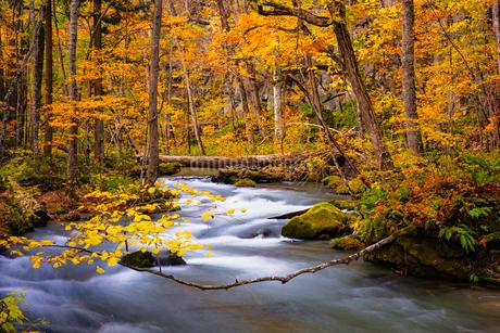 奥入瀬渓流(Oirase River) 日本 青森県 十和田市の写真素材 [FYI03153411]