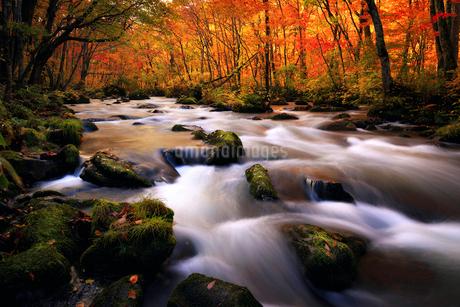 奥入瀬渓流(Oirase River) 日本 青森県 十和田市の写真素材 [FYI03153412]