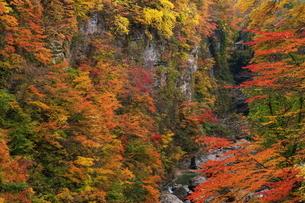 小安峡 日本 秋田県 湯沢市の写真素材 [FYI03153418]