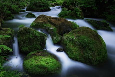 奥入瀬渓流(Oirase River) 日本 青森県 十和田市の写真素材 [FYI03153429]