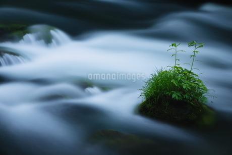 奥入瀬渓流(Oirase River) 日本 青森県 十和田市の写真素材 [FYI03153430]