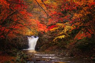止滝(とまりだき) 日本 秋田県 鹿角市の写真素材 [FYI03153431]