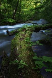 奥入瀬渓流(Oirase River) 日本 青森県 十和田市の写真素材 [FYI03153437]