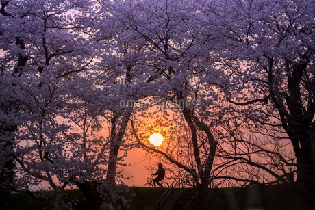 鶴岡市 日本 山形県 鶴岡市の写真素材 [FYI03153468]