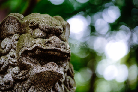 狛犬の写真素材 [FYI03153602]