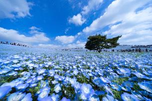 ひたち海浜公園 日本 茨城県 ひたちなか市の写真素材 [FYI03153767]
