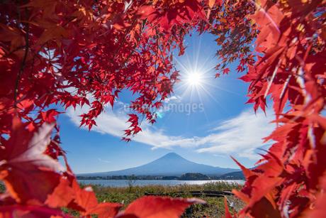 大石公園 日本 山梨県 富士河口湖町の写真素材 [FYI03153770]
