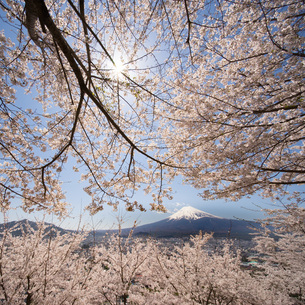 新倉富士浅間神社 日本 山梨県 富士吉田市の写真素材 [FYI03153773]