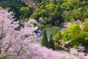 春の市来観音ヶ池公園の写真素材 [FYI03153793]