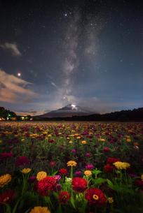 花の都公園 日本 山梨県 山中湖村の写真素材 [FYI03153842]
