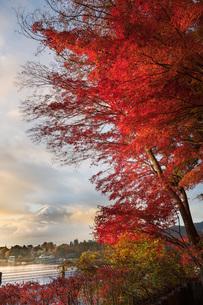 紅葉トンネル 日本 山梨県 南都留郡の写真素材 [FYI03153861]