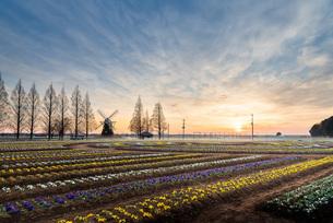 あけぼの山農業公園 日本 千葉県 柏市の写真素材 [FYI03153880]