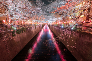 目黒川 日本 東京都 目黒区の写真素材 [FYI03153883]