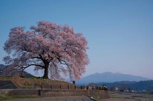 わに塚の桜 日本 山梨県 韮崎市の写真素材 [FYI03153914]