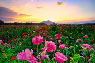 小貝川ふれあい公園 日本 茨城県 下妻市の写真素材 [FYI03153938]