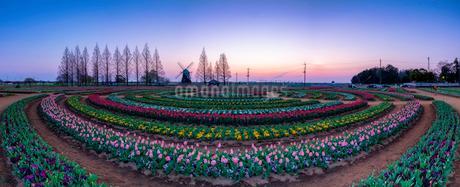 あけぼの山農業公園 日本 千葉県 柏市の写真素材 [FYI03153943]