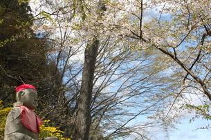 岩手 平泉 中尊寺 「東北の春」の写真素材 [FYI03153958]