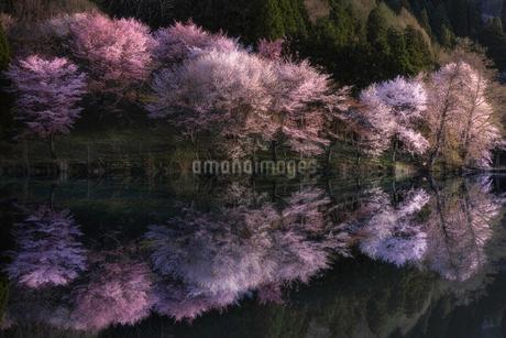 中綱湖 日本 長野県 大町市の写真素材 [FYI03153992]
