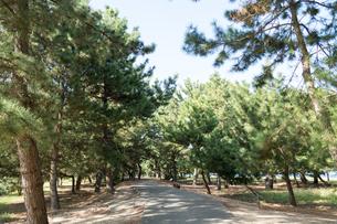 松林の サイクリング 道 の写真素材 [FYI03154154]
