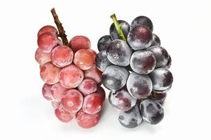 白背景の大粒の葡萄の写真素材 [FYI03154420]