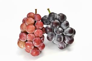 白背景の大粒の葡萄の写真素材 [FYI03154422]