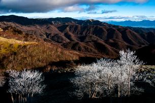 ビーナスラインより霧氷のダケカンバと山並みの写真素材 [FYI03154489]