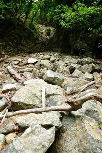 土砂崩れの写真素材 [FYI03154497]