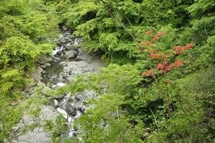 春の早戸川の写真素材 [FYI03154504]