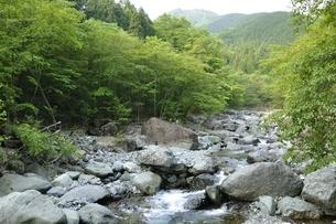 早戸川より新緑の白馬尾根を望むの写真素材 [FYI03154519]