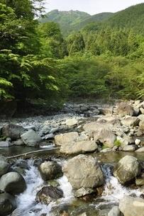 早戸川より新緑の白馬尾根を望むの写真素材 [FYI03154528]