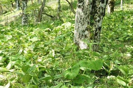鬱蒼と生い茂る山地の写真素材 [FYI03154582]
