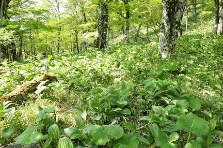 鬱蒼と生い茂る山地の写真素材 [FYI03154583]